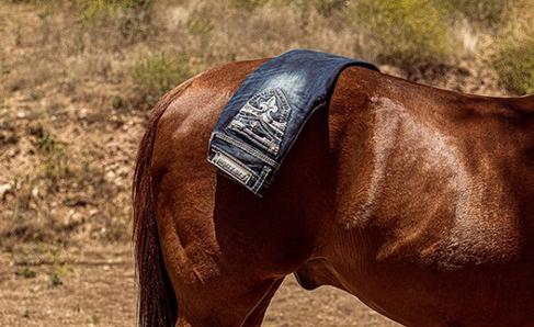 Rock Revival Jean Display on Horse
