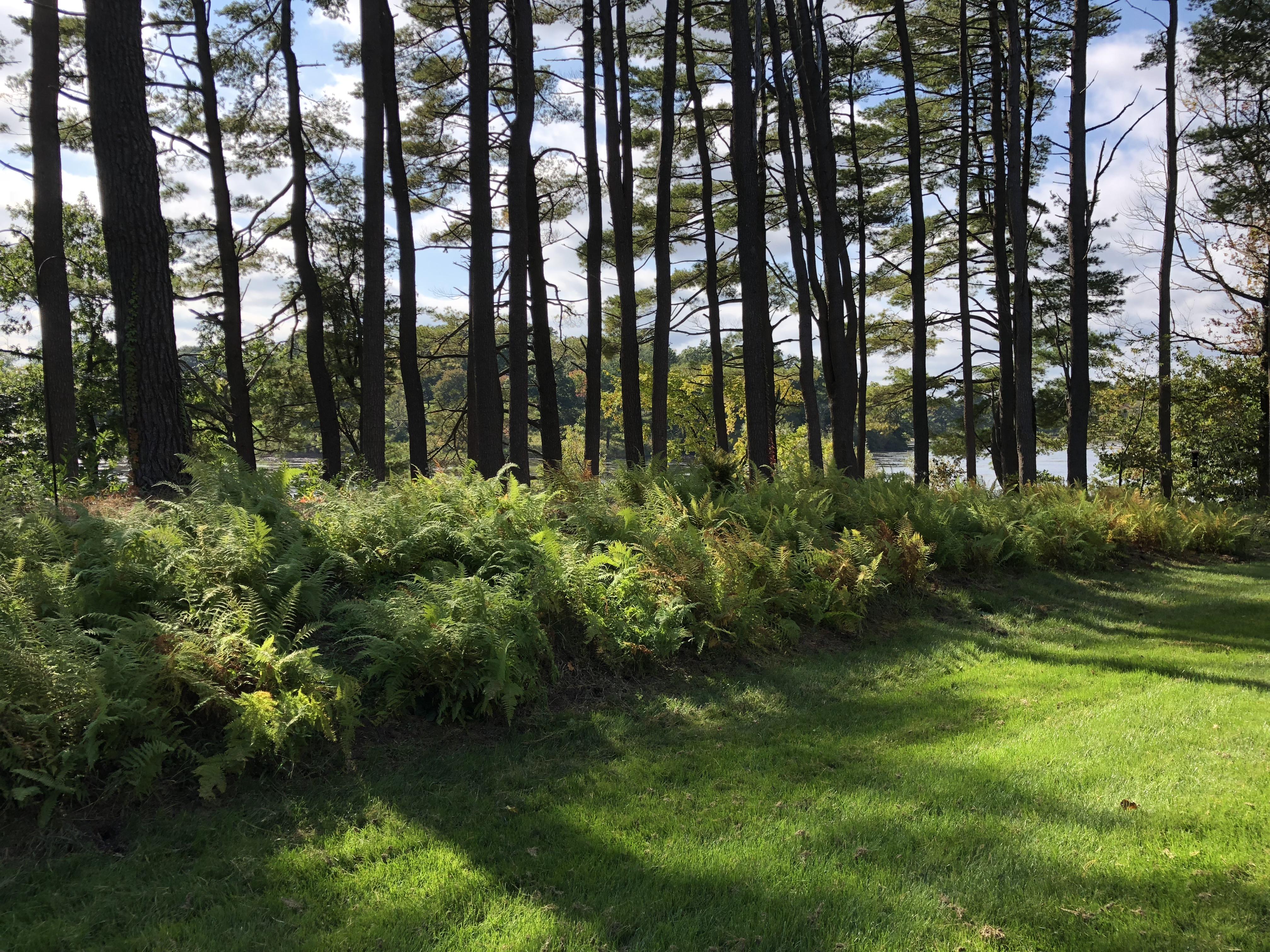 Great Pond Landscape