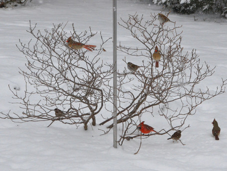 Snow Day with Birds