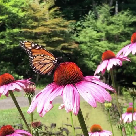 Pollinators at work