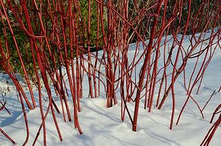 Garden design for all seasons North Shore MA