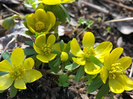 April 1: Spring Has Sprung