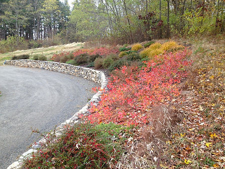 Stone wall with slope planting in autumn