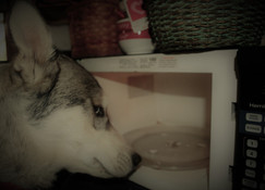 Dog Training in The Microwave Age