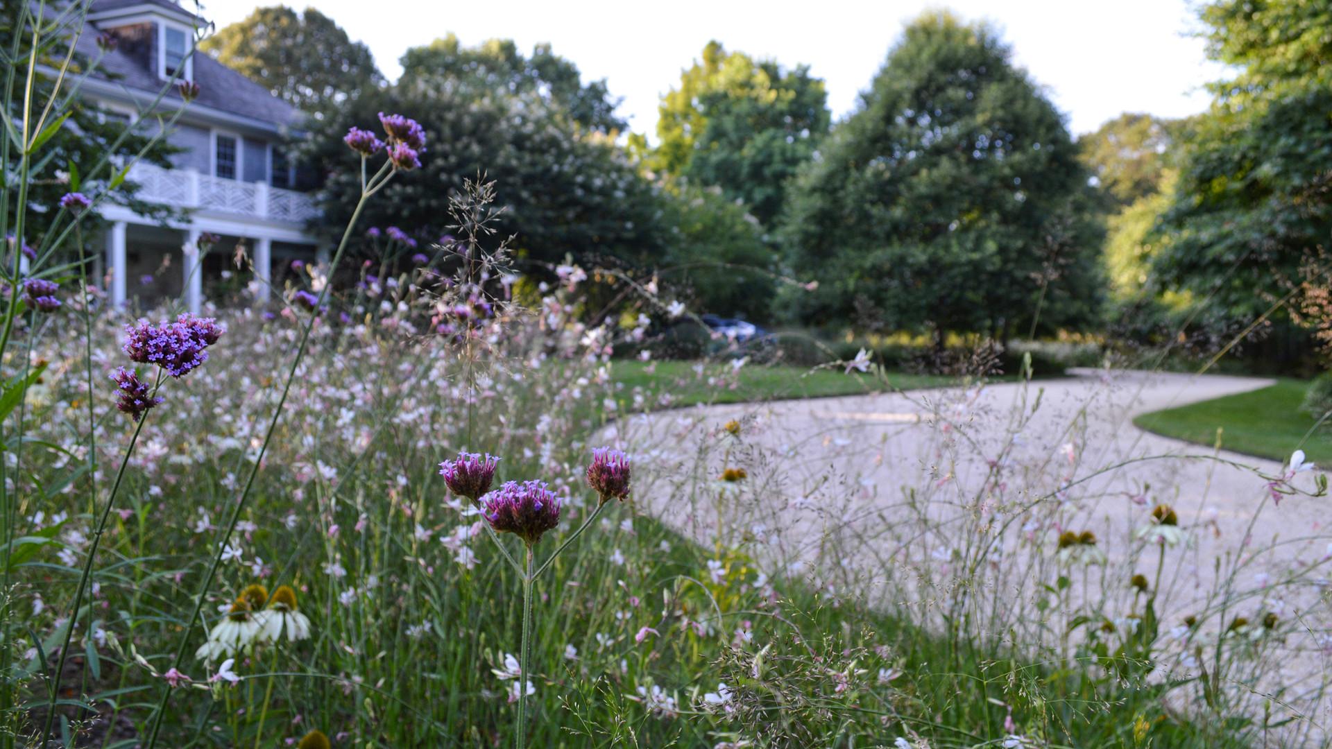 Re-envisioning a Hamptons Landscape