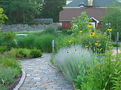 path with perennials and grasses.jpg