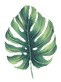 leaf03.png