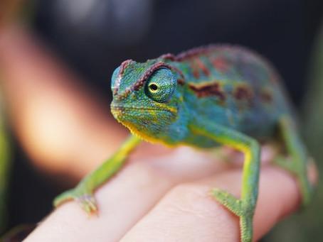 Communication chameleon - speak so you can be heard