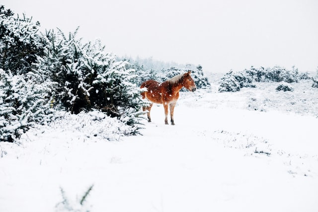 A horse stands in the snow