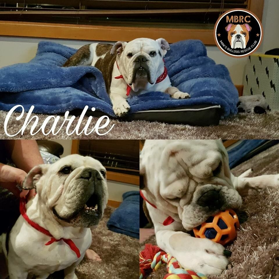 Charlie profile
