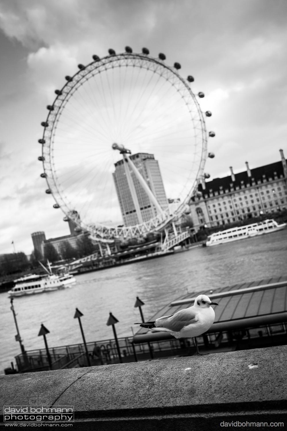 london_david_bohmann12