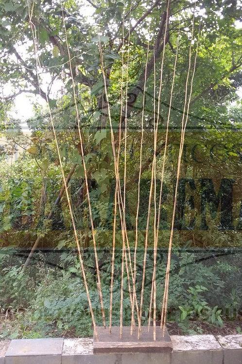 Conjunto com doze varas de bambu para pesca e uma base.