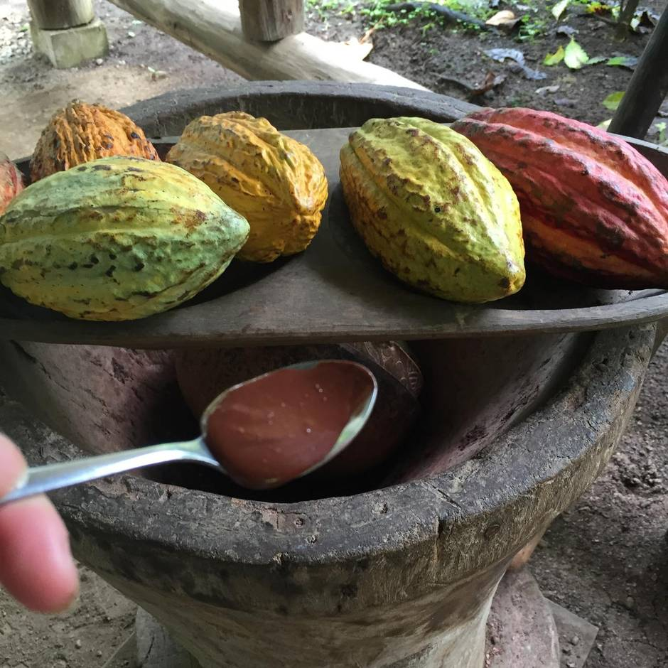 Cacao+pod+to+chocolate+-+Rainforest+Chocolate+tour++www.ittybittyfoodies.com