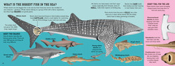 014-015_Biggest_fish_in_the_sea