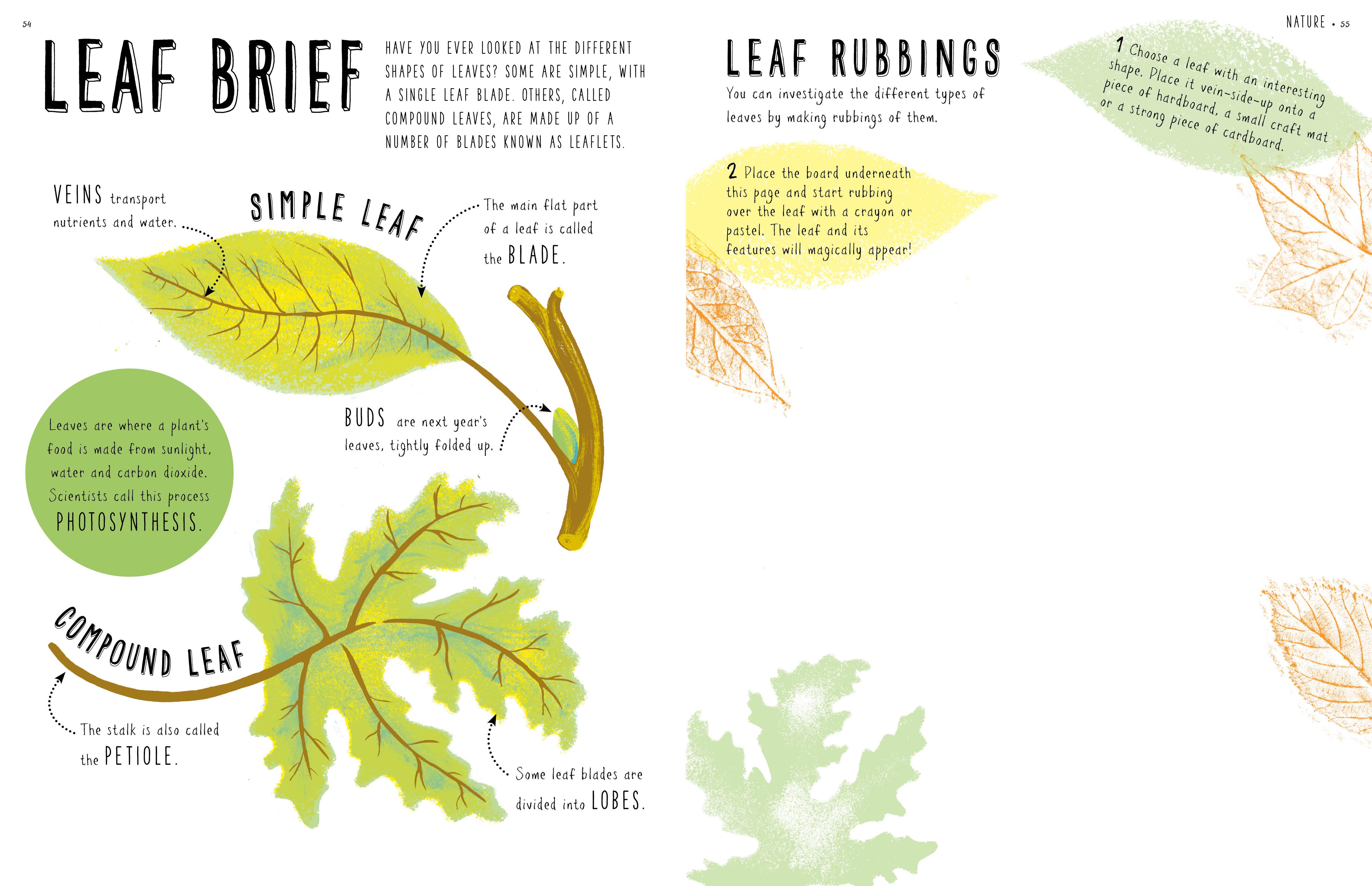 Make leaf rubbings