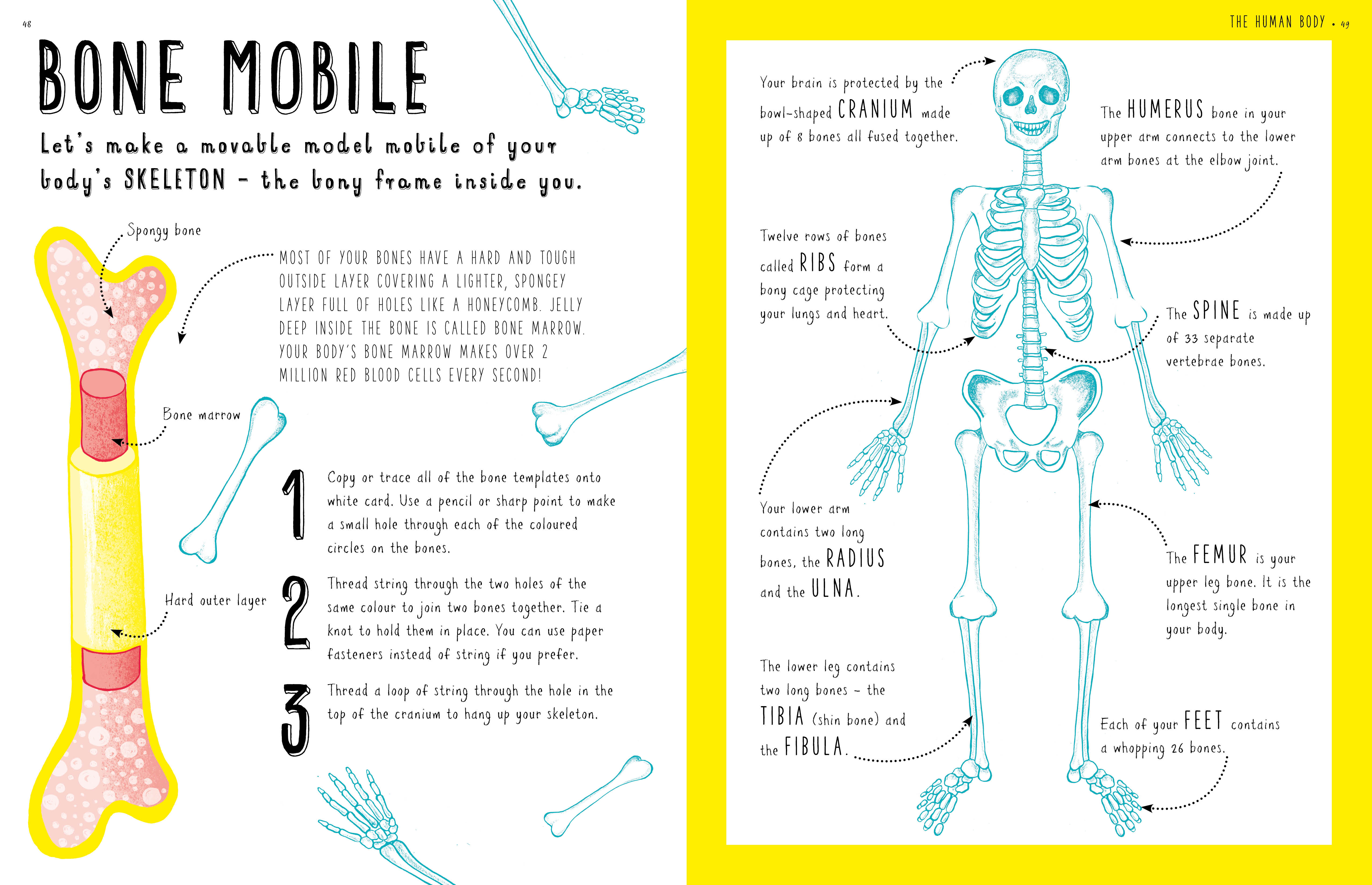 Make a bone mobile!