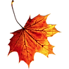 37623-6-fall-autumn-leaves-transparent_e