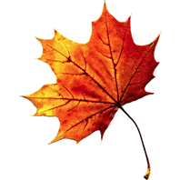 37623-6-fall-autumn-leaves-transparent.p