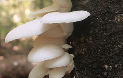 oyster-summer-white-logs-1.jpg