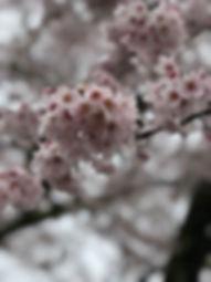 photo_2020-05-18 23.37.39.jpeg