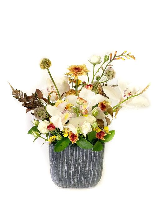 White Cymbidium Orchid in Grey Cement Vase
