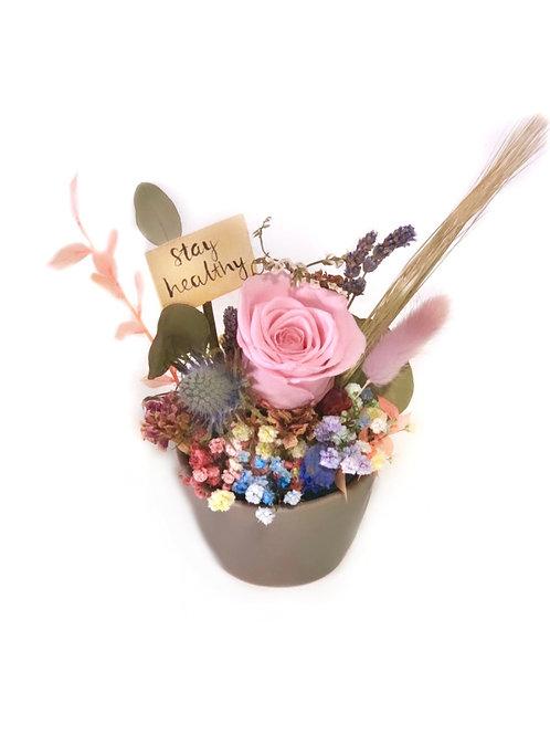 Pink Rose in Grey Pot
