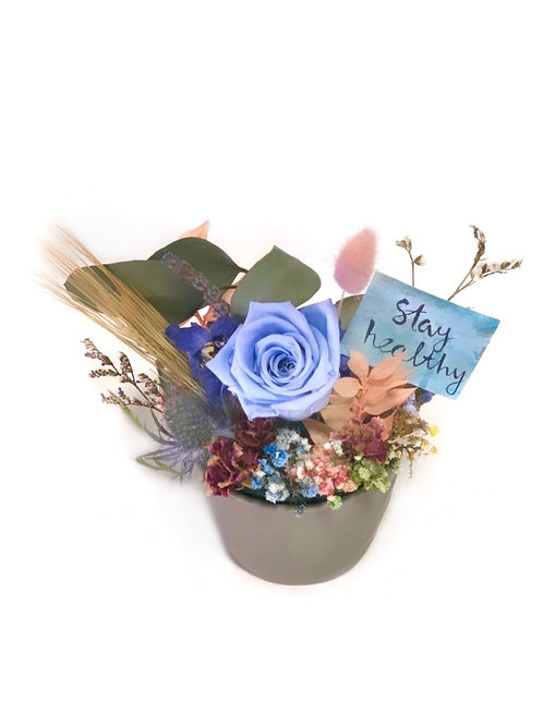 Blue Rose in Grey Pot