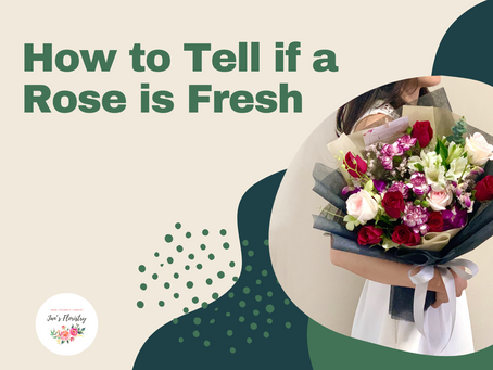 How to Tell if a Rose is Fresh