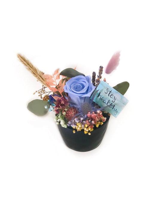 Blue Rose in Black Pot