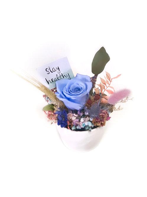 Blue Rose in White Pot