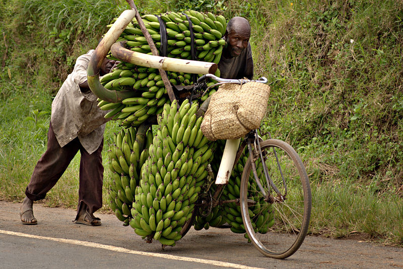 matooke, uganda, bananas, bike, hard work
