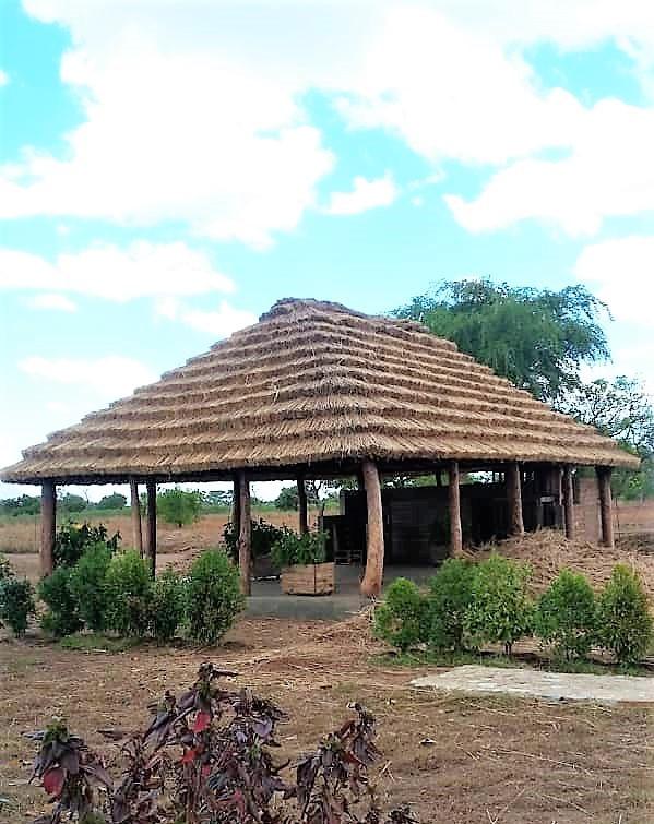 Thatch, village, traditional craft, uganda, napak, kapelebyong, karamoja, teso