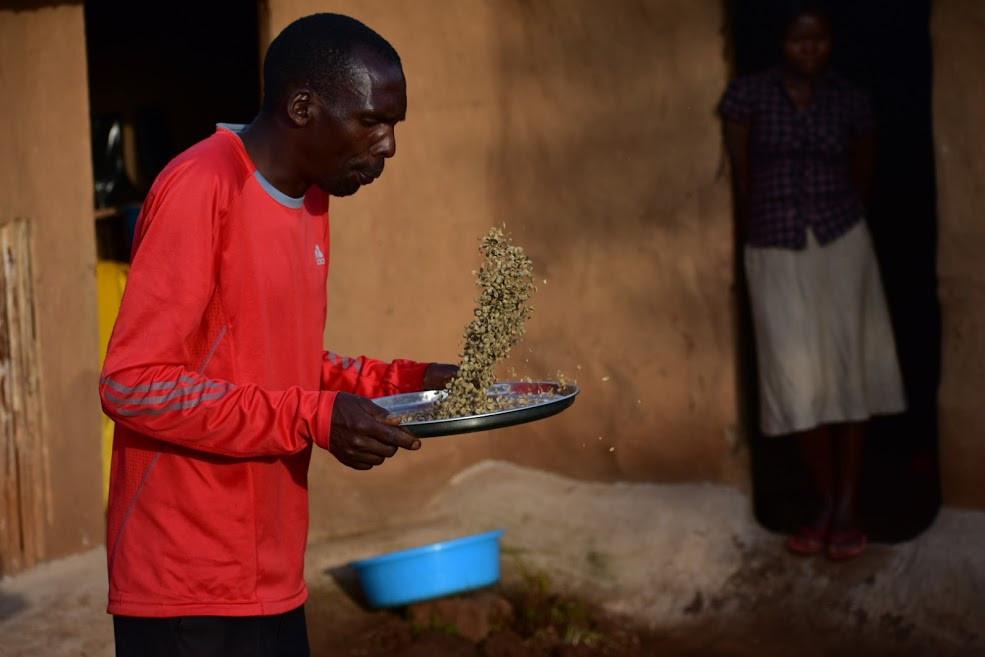 Sipi falls, kapchorwa, guide, responsible tourism, coffee production, uganda