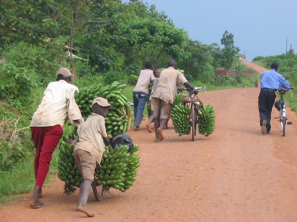 matooke, bananas, bicycle, Uganda