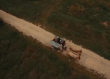 Balade découverte de Petit-canal en charrette à bœufs