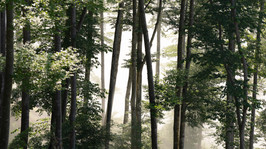 Misty Forest in the beautiful Morning Sun.jpg