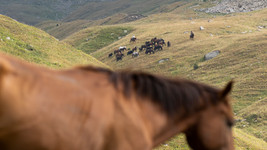 Sheperds & Horses