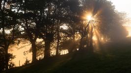 Warm Morning Light