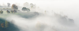 Covered by Mist