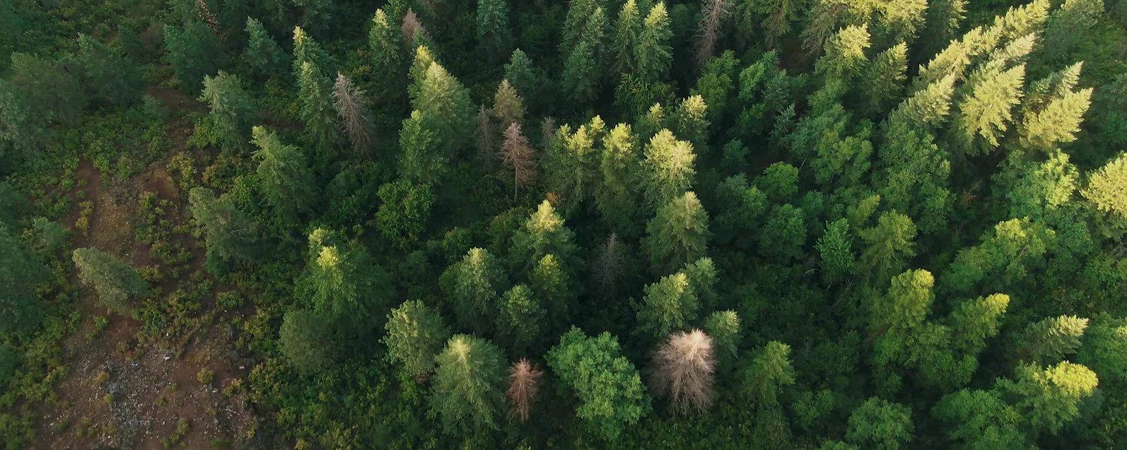 Bosque Sagrado