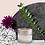 Thumbnail: Crema Tulsi con Ylang-ylang