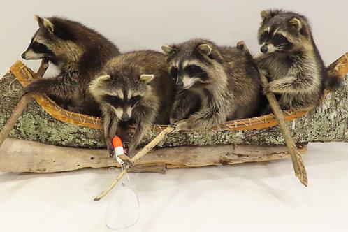"4 Raccoons in a canoe ""Noah's Ark"""