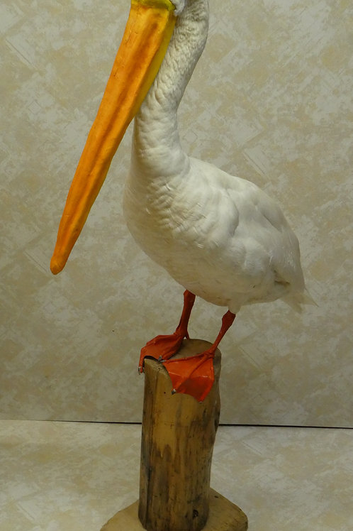 Faux Pelican Taxidermy