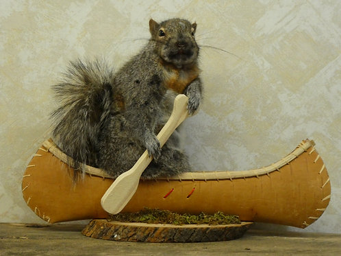 Canoeing Squirrel Taxidermy