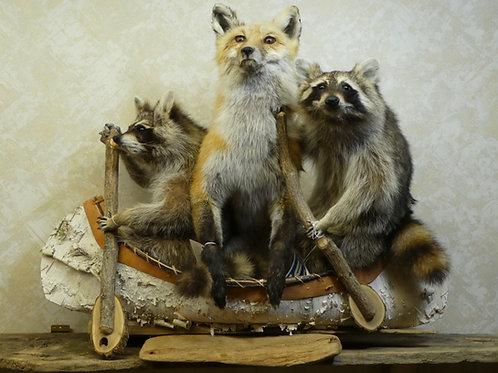 Noah's Ark --2 Raccoons 1 Red Fox Taxidermy