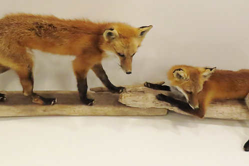 Red Fox Double Wall Mount