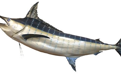 Lg Blue Marlin Taxidermy Reproduction Mount