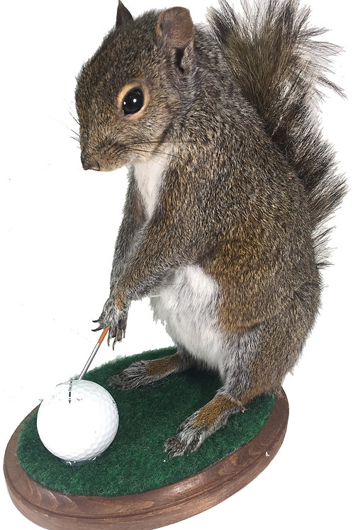 Golfing Squirrel Taxidermy Mount For Sale
