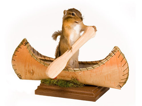 Canoeing Chipmunk Taxidermy Mount For Sale