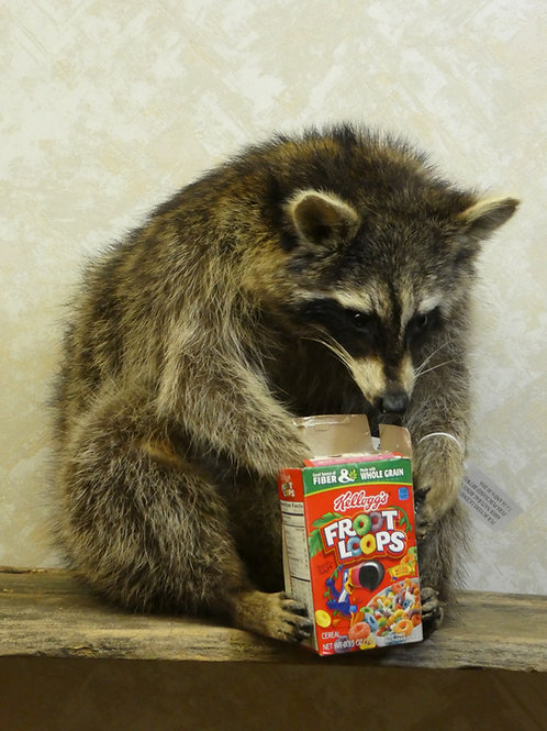 Raccoon with Cereal Box